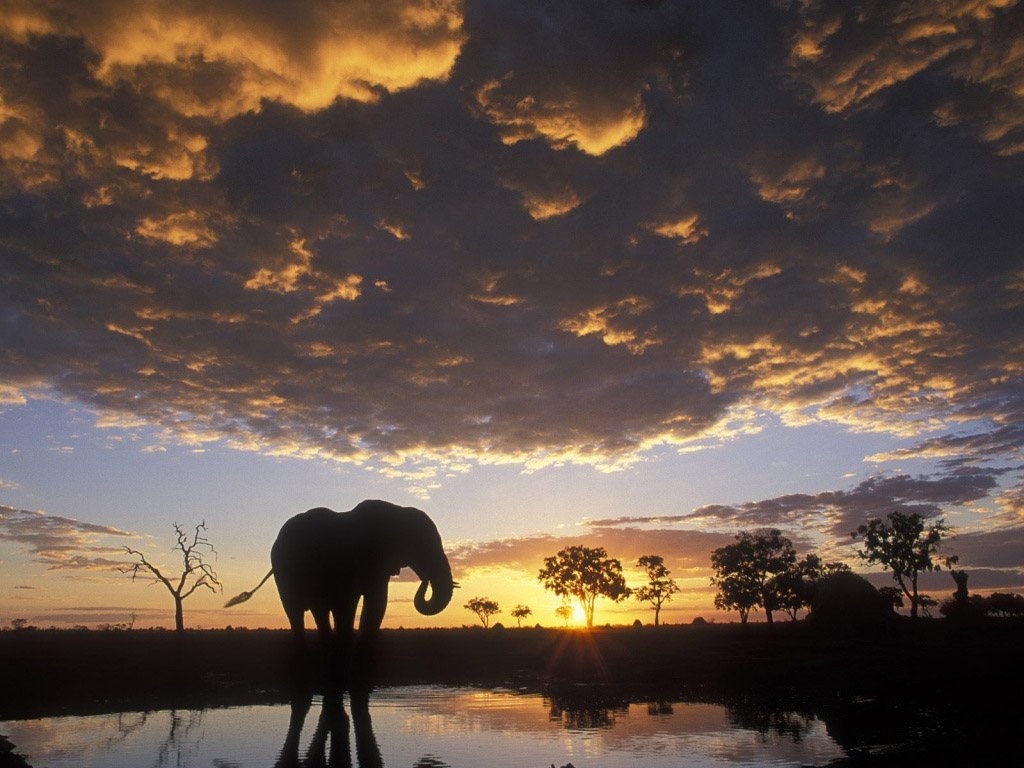 Free African Elephant Wallpaper download Animals Town
