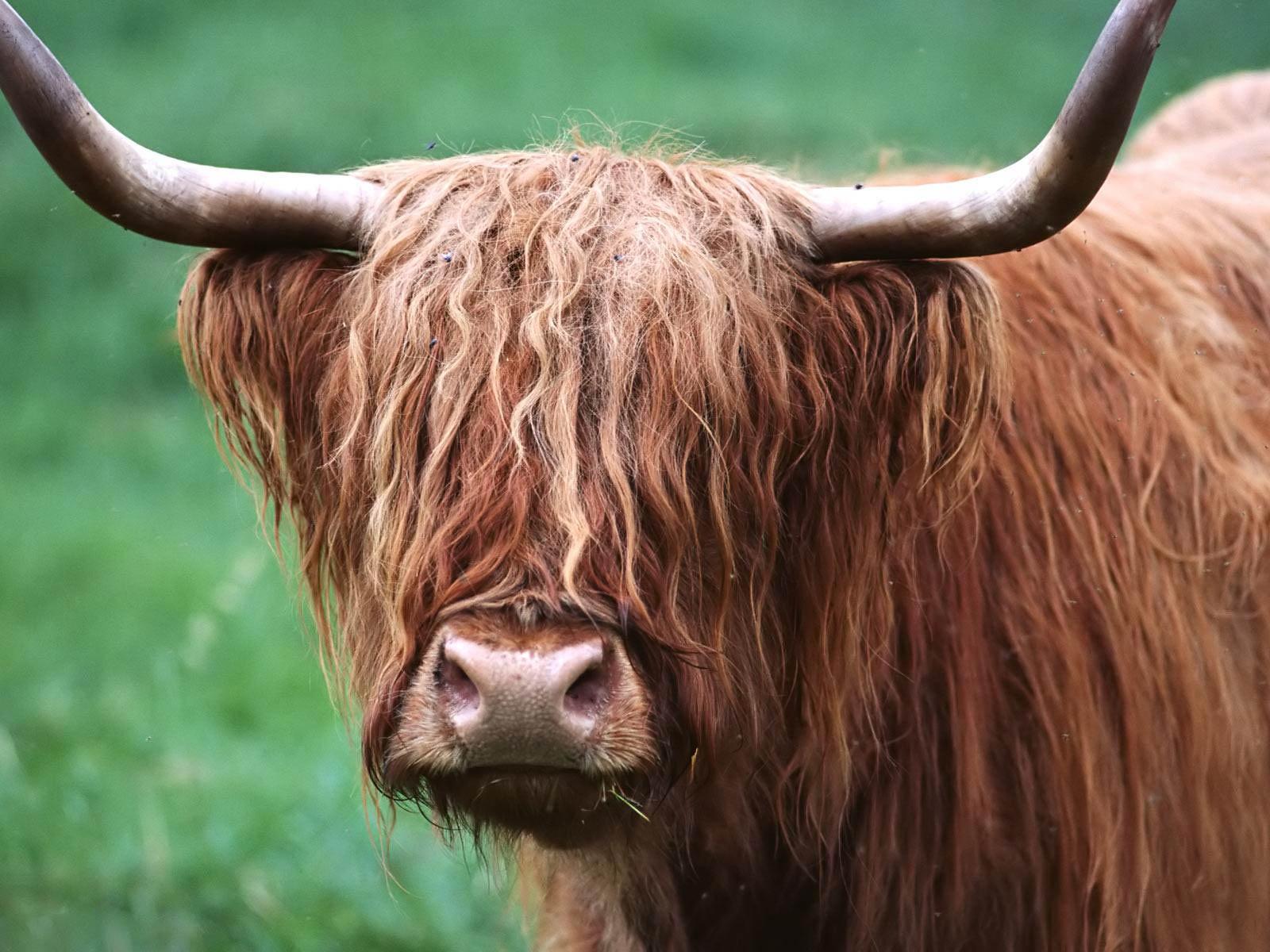 Wonderful Bison Wallpaper - bison-wallpaper-3  Trends_1007844.jpg