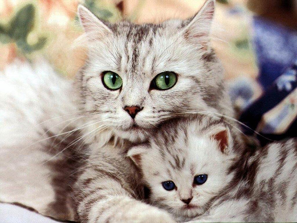 cats | Cats Animals Kittens Pets Wide Wallpaper | cats | Pinterest ...