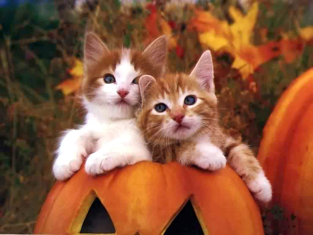 two cute cats wallpaper desktop and mobile wallpaper - animals town