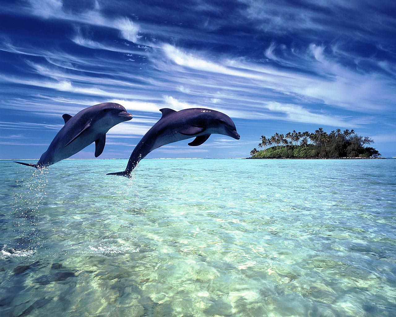 Free Dolphin Wallpaper Download