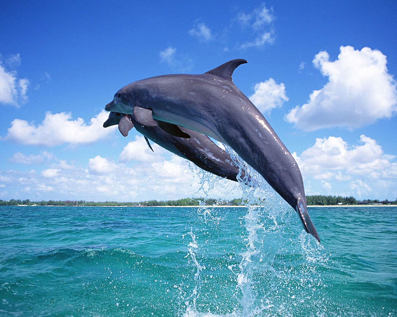 Dolphin Wallpaper and background Animals Town