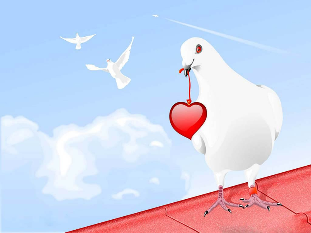 Dove Desktop and Mobile Wallpaper Animals Town