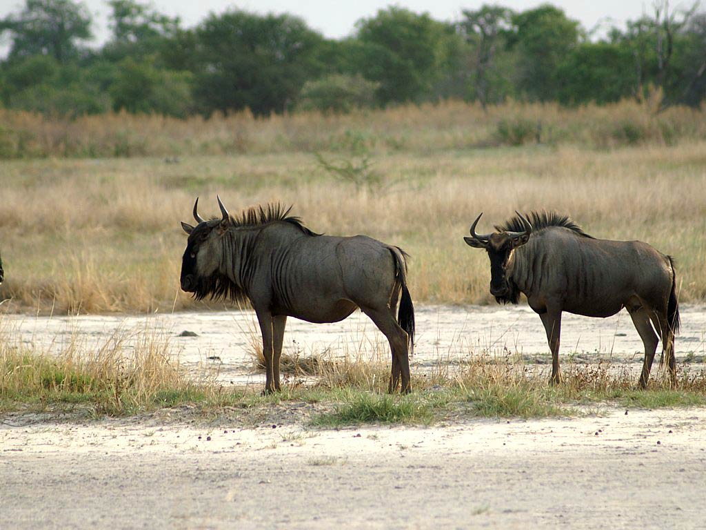 free Gnu wallpaper wallpapers and background