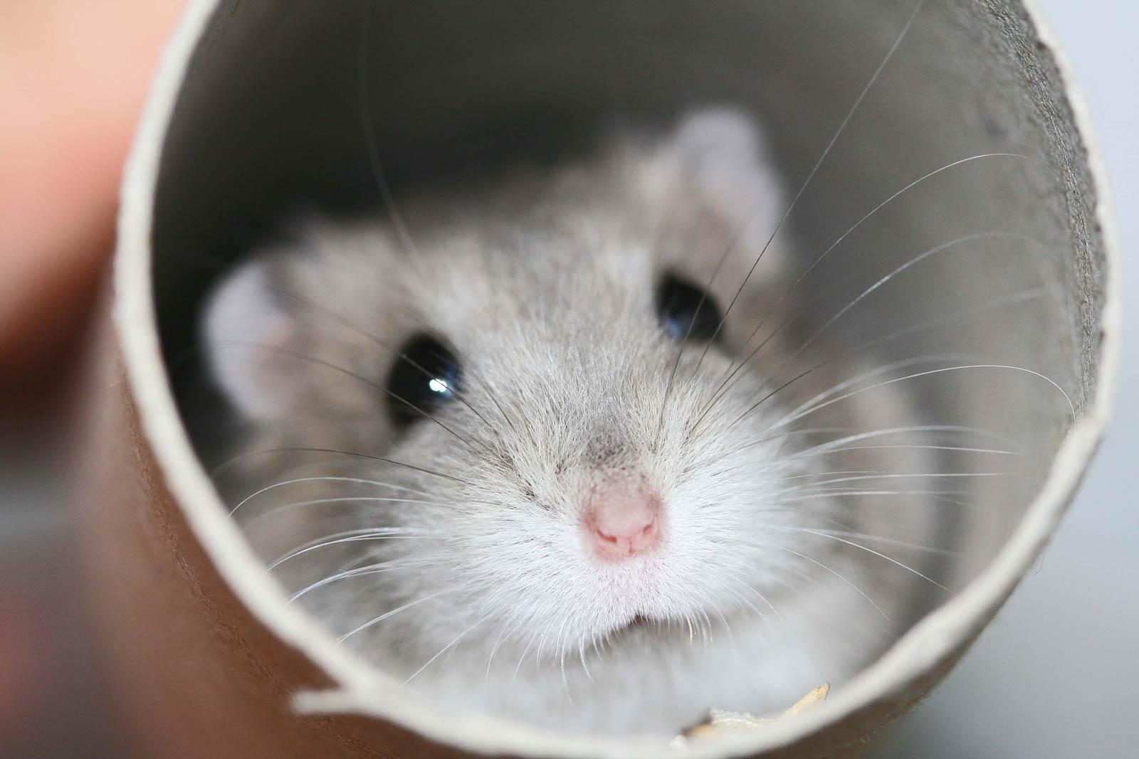 Hamster free p***