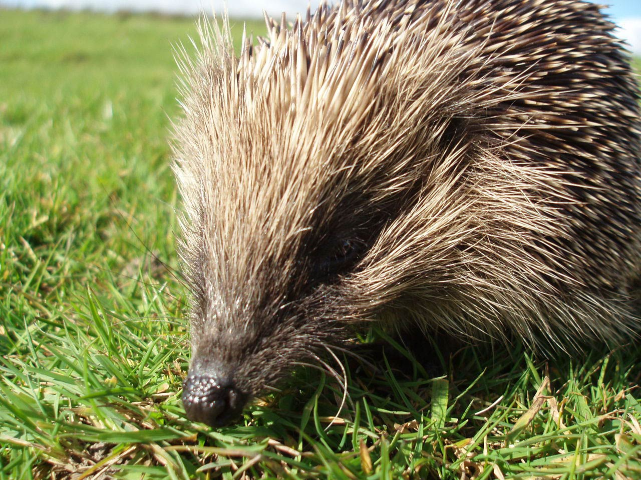 1494878236 maxresdefault also hedgehog wallpaper 1 moreover s792746644104274745 p1 i1 w1265 moreover 9d8f5f9430bfdadfaf08cee7b5da8e37 furthermore 35i0ewk moreover Blank Weekly Schedule free together with Kid Coloring Pages My Little Pony Rainbow Dash 4 further  in addition  in addition 150505 MandalaMothersDay 2 besides BcgKxo6Li. on cute coloring pages for s