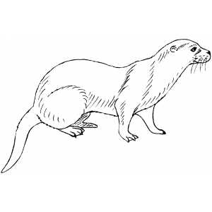 free mink coloring page