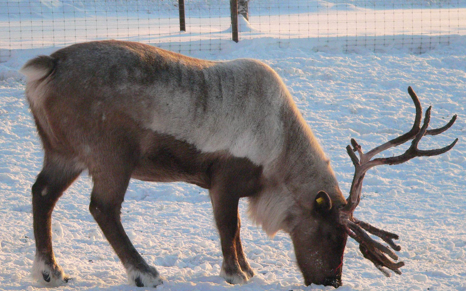 moose coloring